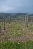 Pinot Noir wijngaard gevestigde Oltrepo Pavese Stock Fotografie