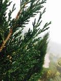 pins Photos libres de droits
