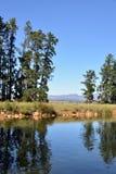 Pins au barrage Image libre de droits