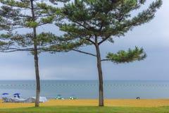Pins au bord de la plage photo stock