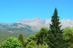 Pins avec des montagnes derrière Photo stock