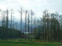 Pins avec la montagne et le ciel de nuages en automne Photo stock
