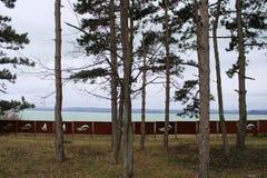 Pins chez le Lac Balaton images stock