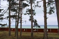 Pins chez le Lac Balaton photo libre de droits