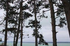 Pins chez le Lac Balaton photographie stock libre de droits