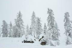 Pins couverts de neige à la station de sports d'hiver de Nassfeld photo stock