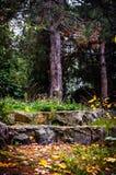 Pins d'automne entourés par des pierres Photo stock