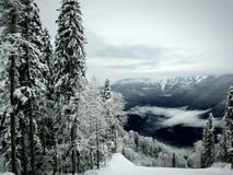 Pins dans la neige, vallée neigeuse Photographie stock libre de droits