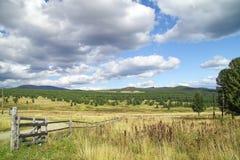 Pins dans les montagnes Photographie stock