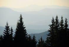 Pins dans les montagnes Photographie stock libre de droits
