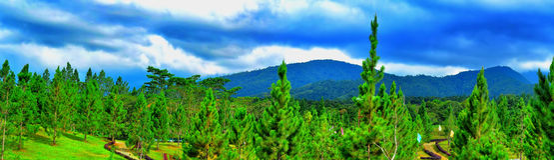 Pins de montagne Photographie stock libre de droits
