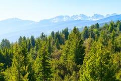 Pins de ressort et montagnes verts de neige par des lacs Rila en Bulgarie Photo stock