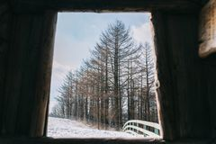 Pins en hiver chez Daegwallyeong, Corée du Sud photos libres de droits