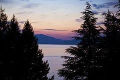 Pins et coucher du soleil Image stock