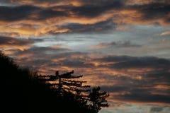 Pins et coucher du soleil d'or Photo libre de droits