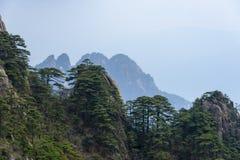 Pins et montagnes de la Chine photos libres de droits