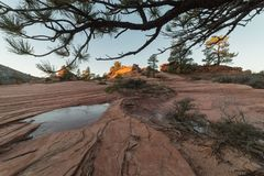Pins et porte-malheur d'hiver dans le pays de slickrock Photo stock