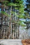 Pins grands par le chemin au parc d'état du comté de Brown Image stock