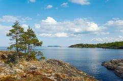 Pins sur la côte en pierre Photographie stock libre de droits