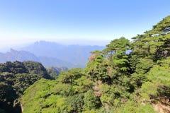 Pins sur la montagne sanqingshan, adobe RVB image libre de droits