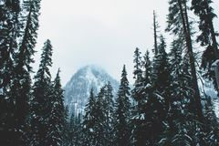 Pins sur le flanc de coteau, lac snow, Washington photos libres de droits