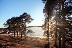 Pins sur le rivage d'un lac congelé Photo stock