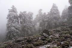 Pinsapar såg det snöig insnöat vintersäsongen, MÃ-¡ laga Arkivfoto