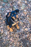 Pinscher карлика, собака Стоковые Изображения RF