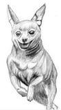 Pinscher diminuto do cão do esboço Ilustração Stock