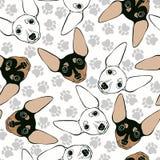 Pinscher diminuto Teste padrão sem emenda com as caras bonitos do cão e os traços do cão ilustração do vetor