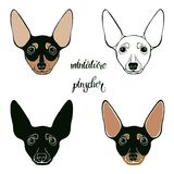 Pinscher miniature Ensemble de vecteur de visage du ` s de pinscher Illustration tirée par la main de vecteur sur un fond blanc c Photographie stock