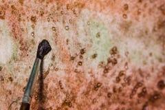 Pinsel auf Segeltuch Lizenzfreie Stockbilder