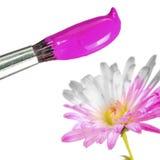 Pinsel mit rosafarbener Lack-färbender weißer Blume Stockbild