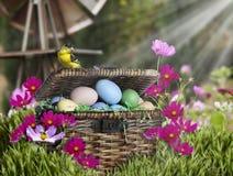 Pinson américain d'or sur le panier de Pâques Photos libres de droits