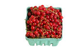 Pint box of red currants isolated on white Stock Image