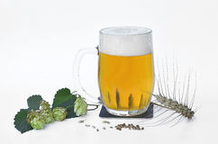 Pint full of beer with dried barley and hop cones Royalty Free Stock Image