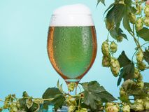 Pint glass of beer with ingredients for homemade beer on blue royalty free stock image