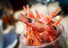 Pint of Prawns or Shrimps Stock Photo