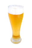 Pint of lager. Pint of beer isolated on white Stock Images