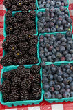 Pint Rows of Blueberries and Black Hull Berries Royalty Free Stock Images
