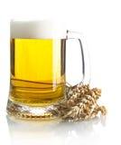 Pinta da cerveja na tabela com as orelhas do trigo isoladas no branco Foto de Stock