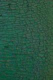 Pinta del bordo di legno di verde Fotografia Stock Libera da Diritti