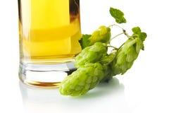 Pinta potata di birra sulla tavola con i coni di luppolo isolati su bianco Fotografia Stock Libera da Diritti