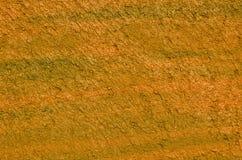 Pintada anaranjada Fotografía de archivo libre de regalías