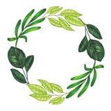 Pintado à mão com a grinalda floral dos marcadores com galho, ramo e as folhas abstratas verdes Fotografia de Stock Royalty Free