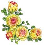 Pintado con la esquina de la acuarela con las rosas y las hojas brillantes de e Imagenes de archivo