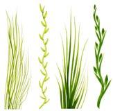 Pintado en elementos de la hierba verde del aguazo en un fondo blanco Foto de archivo libre de regalías