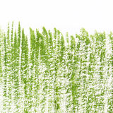 Pintado en hierba verde del aguazo en un fondo blanco Imágenes de archivo libres de regalías