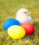 Pintainho ao lado dos ovos da páscoa coloridos Fotografia de Stock Royalty Free