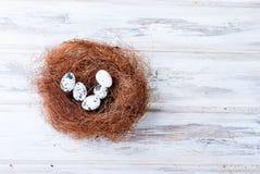 Pintainho e ovos da páscoa no ninho Fotos de Stock Royalty Free